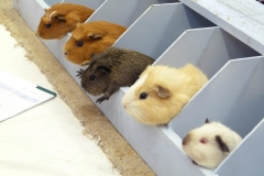 Loads of Cute, Furry Rabbits and Guinea Pigs
